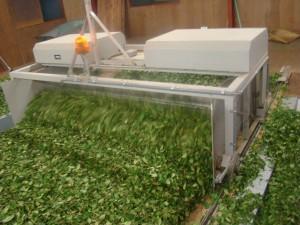大量の茶葉を機械で効率よく攪拌